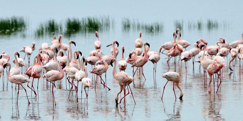 lake nakuru national park_